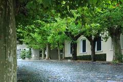 callecita (lili.raijel) Tags: arbol uruguay arboles colonial colonia empedrado
