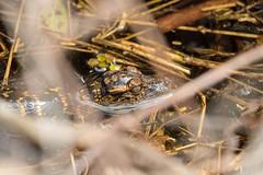 7K8A8464 (rpealit) Tags: nature arthur scenery wildlife marshall national r babie refuge alligators loxatchee