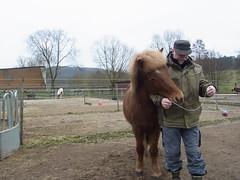 R0026508 (joachimelbing) Tags: mit lustig yoyo spielen pferden yoyogame