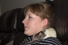 IMG_3478LEC  Danielle (Joanne 1967 (SIMPLY PHOTOGRAPHY)) Tags: rat ratties petrats simplyphotography joanneshaw