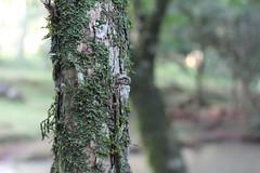 un apaso a la vez (* LiLA *) Tags: gusano misiones insecto