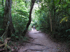 "Tikal et sa jungle <a style=""margin-left:10px; font-size:0.8em;"" href=""http://www.flickr.com/photos/127723101@N04/25965335640/"" target=""_blank"">@flickr</a>"