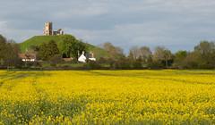 Burrow Mump (Steve Balcombe) Tags: uk church field sunshine landscape ruins somerset rape levels canola rapeseed burrowmump burrowbridge