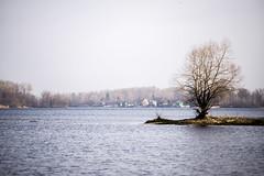 DSC_4802 (kabatskiy) Tags: city urban lake nature landscape spring dump minimal marsh abstracts