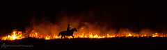 Clover Cliff Ranch Night Prairie Burn (d_russell) Tags: horse night fire kansas ef24105mmf4 prairieburn canon5dmarkiii clovercliffranch craigaccordphotoworkshop