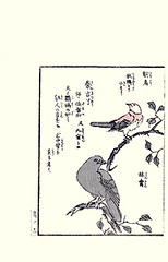 Japanese robin and common hill myna (Japanese Flower and Bird Art) Tags: bird art robin japan japanese book erithacus hill picture common woodblock kosa religiosa myna ukiyo urakawa muscicapidae sturnidae gracula akahige readercollection
