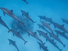IMG_0603 (eye[4]eye) Tags: egypt diving gypten tauchen bluewaves