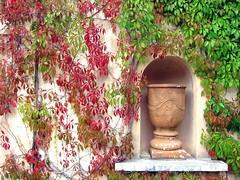 Changing Seasons (Mary Faith.) Tags: nature urn wall seasons vine foliage climber