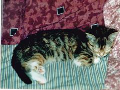 Little Yum Yum 1_edited-1 (kevin63) Tags: sleeping people cats kitten photos calico yumyum lightner avalanche