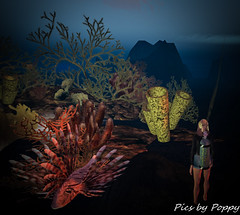 Whimsy-78 (Popis_second_life) Tags: whimsy secondlife