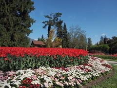 mozirski-gaj_04 (carlo) Tags: flowers olympus slovenia slovenija fiore botanicalgarden omd em1 ortobotanico giardinobotanico mozirje mozirskigaj