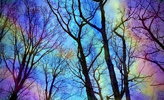 Tye dye sky (SurFeRGiRL30) Tags: trees sky art beautiful clouds effects newjersey spring rainbow colorful pretty painted gorgeous branches awesome nj filter april buds colourful tyedye awesomesauce