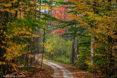 A Path in the Forest (Samantha Decker) Tags: autumn fall manchester vermont newengland vt hildene canonef135mmf2lusm canoneos6d samanthadecker