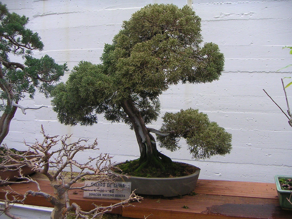 The world 39 s best photos of baum and bonsai flickr hive mind for Baum pflanzen
