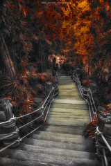 Fairytale path (Manjik.photography) Tags: road park autumn trees light red orange plant color tree green fall nature beautiful beauty leaves yellow stairs rural forest season landscape outdoors wooden leaf maple woods october scenery colorful natural bright outdoor path vibrant background scenic peaceful foliage environment pathway d810 manjik