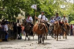 Desfile del Dia de Tradicion 2 (pniselba) Tags: horse criollo caballo buenosaires gauchos gaucho tradicion provinciadebuenosaires sanantoniodeareco areco diadelatradicion