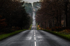 The Road (Virtualcomic) Tags: travel trees winter nature canon adventure cannock canoneos naturephotography travelphotography 70d canonphotography 24105mml canoneos70d