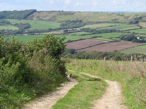 Smedmore Hill (Dorset)