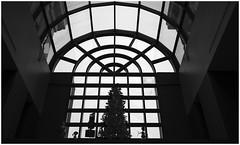 Dentistry (sorrellbruce) Tags: silhouette holidays fuji humor badpun holidaydecorations dentistry pun chrismastree sharpening lr6 photoninja capturenx2 thomasfitzgerald fujinon23mm fujixt1 thomasfitzgeraldpresets