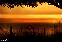 01/52 New Beginnings {EXPLORE} (Lyndon (NZ)) Tags: newzealand nature sunrise landscape farm farming nz wairarapa greytown 2016 week1theme week12016 52weeksthe2016edition weekstartingfridayjanuary12016