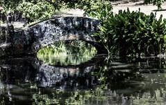 The Old Bridge (Bernai Velarde-Light Seeker) Tags: old bridge lake rio gardens america river puente lago pond small central summit panama botanicgarden jardinbotanico centroamerica velarde bernai