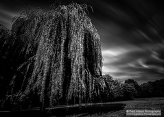 Wind and Willow (Fred-Adams) Tags: longexposure trees france forest landscape mono country dordogne monochromatic willow le perigord agonac fredadamsphotography