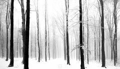 (Emilien Gass) Tags: blackandwhite bw snow tree fog forest canon 550d tokina1116mm