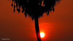 Camera-shy Sun Causing Silhouette (Raj the Tora) Tags: sunset red orange sun yellow evening shades sunshade oranges yellows sunrays reds settingsun vedanthangal sungames vedanthangalbirdsanctuary sunatdusk duskshades vedanthangalsanctuary sunwhilesetting