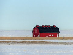 Modern charm (annkelliott) Tags: winter red canada colour building field architecture barn landscape scenery bright outdoor alberta colourful snowcovered annkelliott anneelliott fz200 eofcalgary fz2003 25january2016 modernorrenovated