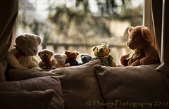 Hole in the Wall Gang (HTBT) (13skies) Tags: window sitting teddy bears hanging curtains daytime windowsill teddybears windowlight htbt sonya99
