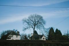 Tree (JacksonSwaby) Tags: blue trees houses sky cloud white house tree nature lines clouds power hedge