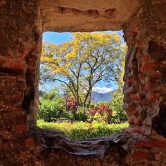 Natural Frame ((Jessica)) Tags: tree church window fountain stone ruins vibrant guatemala sunny bluesky nuns antigua spanish convent crumbling naturalframe pw capuchins