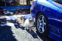 Today's Cat@2016-01-27 (masatsu) Tags: cat pentax cc100 catspotting mx1 thebiggestgroupwithonlycats