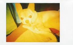 fuji instax mini 6- golden Floyd (EllenJo) Tags: lomo fujifilm newcamera testshots instantfilm fujiinstax linstant fujiinstantfilm ellenjo lomographicsocietyinternational ellenjoroberts february2016