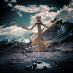Bad Dream (Flamenco Sun) Tags: road dark mantis insect freaky odd nightmare disturbing prayingmantis surreak