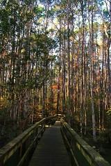 IMG_7384 (SweetMeow) Tags: forest shadows southcarolina boardwalk marsh conservancy hiltonheadplantation whoopingcranepondconservancy