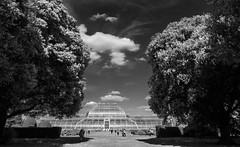 Palm House (Francis Mansell) Tags: cloud kewgardens building tree monochrome kew blackwhite greenhouse glasshouse palmhouse holmoak quercusilex
