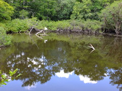 The Sky in a Pond (failing_angel) Tags: florida wetland esterobay fortmyers fortmyer sixmilecypressslough sixmileslough 240515 sixmilecypresssloughpreserve linearecosystem naturaldrainageway