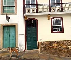 Ele posou pra mim / He stoped and posed for me (Pablo Grilo) Tags: dog minasgerais mg cachorro ouropreto barroco aleijadinho cidadeshistoricas iphone6