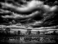 There's a storm brewing (L. Schulte) Tags: trees blackandwhite water clouds river thenetherlands maas brabant cuijk