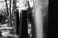 (LaKry*) Tags: trees blackandwhite friedhof berlin cemetery sunshine alberi monocromo blackwhite graves bäume tombs luce biancoenero tombe cimitero berlino gräber sonnenlicht schwarzundweis jüdischerfriedhofweisensee cimiteroebraicoweisensee
