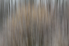 Moving forest Ⅴ (Madhr0013) Tags: tree forest canon schweiz woods outdoor blurred outoffocus icm oof 6d 2016 thurgau sitterdorf canonef70200mmf4lisusm intentionalcameramovement canoneos6d