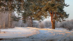 deep freeze (Sergey S Ponomarev - very busy) Tags: road morning trees winter light mist snow cold primavera church nature fog forest sunrise canon landscape eos march spring woods europe frost russia path north natura christian crisp freeze neve birch trunks paysage orthodox marzo hdr luce paesaggio nord russie   russland            vyatka 70d       sergeyponomarev ef24105f40l viatka  wjatka