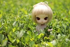 Flynn Flower (n a m i [ 波 ]) Tags: toy doll dal planning pullip jun dotori