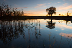 Reflected reed and tree (- David Olsson -) Tags: sunset oktober lake seascape reflection tree reed nature water reflections landscape mirror still nikon october sundown sweden outdoor relaxing calm karlstad mirrored serene fx grad tranquil vr vänern lonelytree d800 värmland 1635 2015 1635mm lakescape gnd skutberget lonesometree leefilters davidolsson 06hard 1635vr
