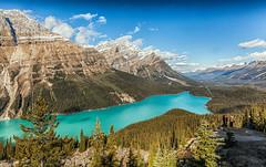 Peyto Lake (pauldunstan1968) Tags: blue trees mountain lake canada water landscape outdoor peyto