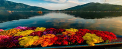 Srinagar,Kashmir (mytravelarmy) Tags: flowers india mountains water horizontal boat asia kashmir srinagar himalayas shikara dallake jammuandkashmir