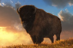 Buffalo At Dawn (deskridge) Tags: brown nature animal animals buffalo russell wildlife nativeamerican prairie wilderness plains bison moran remington earthtones prarie bierstadt catlin earthtone americanbuffalo eskridge northamericanwildlife westernart westernthemed earthtoned bisonart buffaloart buffalothemed bisonthemed buffaloatdawn danieleskridge