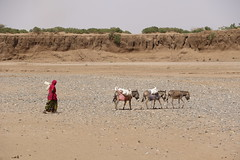 Ethiopia: worst El Niño induced drought in 50 years (EU Civil Protection and Humanitarian Aid) Tags: africa water eau echo eu drought betail ethiopia livestock afrique europeancommission malnutrition ethiopie humanitarianaid secheresse foodinsecurity insecuritealimentaire