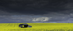 The lone Barn (grahamhutton) Tags: cloud barn spring sony seed dorset oil april lone isolation grad tramlines graduated oilseed oilseedrape yellowfield northdorset leefilter a6000 zeiss1670mmf4za